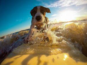 Wie Sie Ihre Ferienwohnung auf Gäste mit Hund vorbereiten